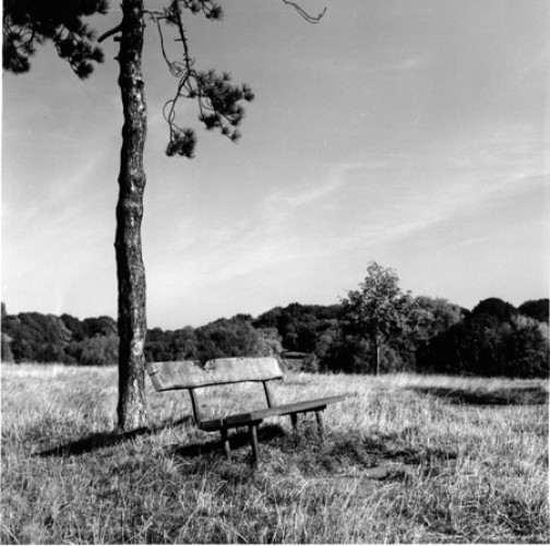 Lonesome Pine and Bench, Hampstead